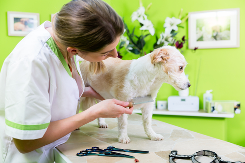 Pet Grooming Techniques 1